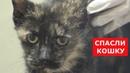 Спасли очень ласковую кошку Ветеринарное ранчо