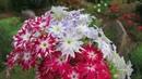 Проверенные семена цветов