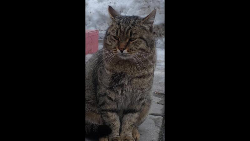 Балашихинский котЭ дал дёру 20180402 160018
