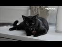 Чёрная кошка Реальная мистика