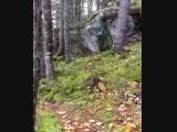 Дышащий лес