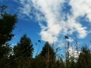 Птички летят домой