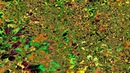 4k Slit scan Video Synthesis Forest Floor