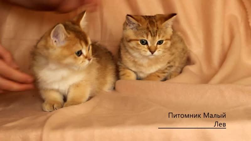 Наши ласковые малыши ❤️👶 . котик слева зарезервирован