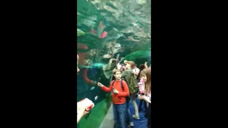 Лизуха в океанариуме