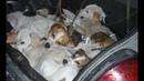 Спасение собак умершего охотника из Юрюзани: собаки погибали от голода.
