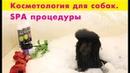 Косметология для собак SPA процедуры в груминге