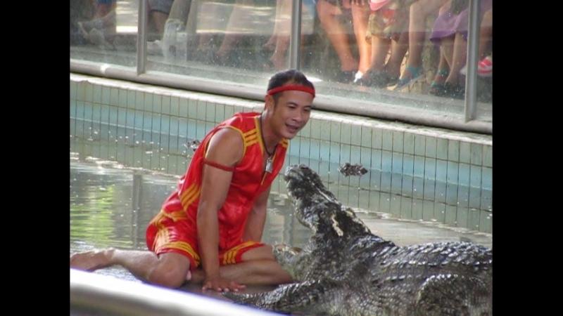 крокодил сытый !