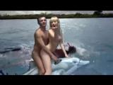 На дельфине в Украину