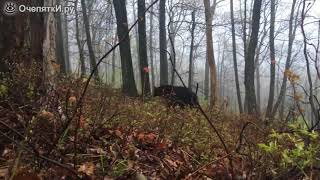 Неожиданный манёвр медведя
