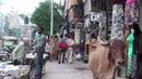 The market of Vadodara (Gujarat - India)