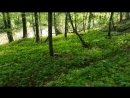Серёгин днюха (12.05.2018г.) поход пешком (идём крутым берегом Тарусы)