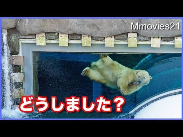 いつもと違う景色に興味津々のリラ Polar Bear Dive
