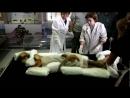 Ученые Нашли Саркофаг Спящей Красавицы в России Часть 2 Тисульская Принцесса Находка Разоблачение