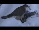 Кривые операторы Animal Planet