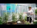 Удачная среда - выращиваем томаты в теплице (Бийское телевидение)