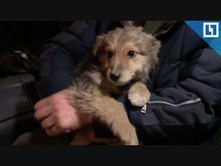 Водитель автобуса спас щенка от мороза