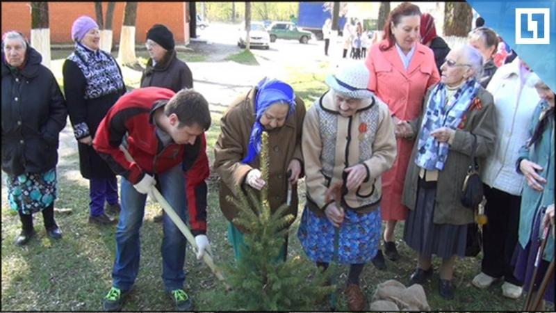 Школьники и ветераны высаживают деревья на Аллеи Победы