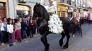 Santa Teresa di Riva (Me) - Un maestoso cavallo Frisone alla Festa della Primavera