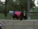 Американский кокер спаниель Стилиш Файн Квин Леди Занятие по дрессировке преодоление городских препятствий Тольятти лето2008