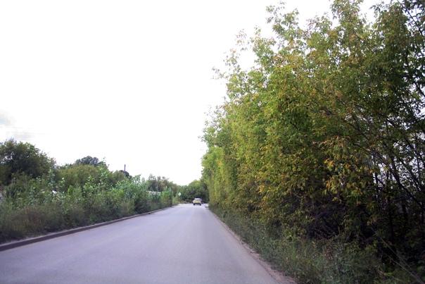 Стена из деревьев.