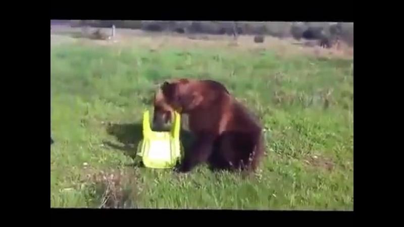 Такого медведя я вижу в первый раз 360