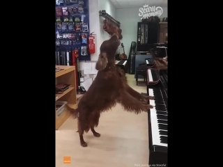 Scary mommy time out _ dog passionately sings the blues