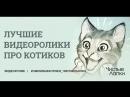 Смешные котики. Часть 12. Видеоподборка от канала The Pet Collective.