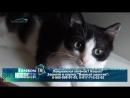 Желаете завести себе друга Обратите внимание на котят и кошек на передержке группы Верный хвостик