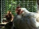 Диалоги о животных Внимание людей к своим питомцам