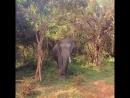 Настоящая дикая жизнь Шри Ланки Не зоопарк Национальный парк