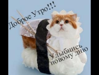 Улыбнись!Приколы с кошками и котами . Подборка смешных и интересных видео с котиками и кошечками