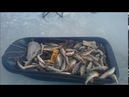 Рыбалим окуня на припое