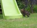 Wie süß diese kleinen Katzen im Garten herumtollen. 😊