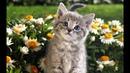 КОТИКИ И ДРУГИЕ МИЛЫЕ ЖИВОТНЫЕ.Cats and cute animals. 猫とかわいい動物