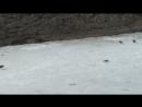 Утки на Черкизовском пруду