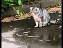 В Микрорайоне у Пятёрочки (г.Kимpы) Змея против котов