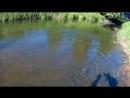 Самое зрелищное вываживание ТРОФЕЙНОЙ форели The most spectacular fight with TROPHY trout