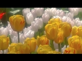 Весна пришла! Оркестр Поля Мориа - Love story - Paul Mauria. Композитор Франсис Лэ (Francis Lai).