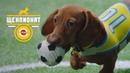 PEDIGREE®: Кусание мяча. Как играть со щенком