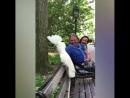 Попугай «облаял» собаку на прогулке в парке