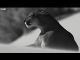 Hakan Akkus & Bugra Atmaca - Darach (Original Mix) ( https://vk.com/vidchelny)