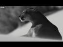 Hakan Akkus Bugra Atmaca - Darach (Original Mix) ( vidchelny)