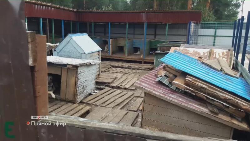 Приют для бездомных животных Атлант во Владимире переполнен