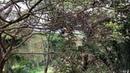 Tucano: Jacarandá. Sacada Dorsal, Tiguera 360, Juiz de Fora. IMG_7822. 137,6 MB. 08h35. 24out18