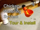 Chicken Watering: Tour and Install of my gravity fed system