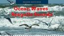 Calming Seas - Ocean Waves Seagulls Sounds For Relaxation, Meditation, Reading, Sleep - Ocean ASMR