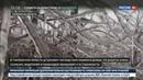 Новости на Россия 24 В Тамбовской области несколько дней идет ледяной дождь