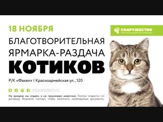 Ярмарка раздача котиков 18.11.2018