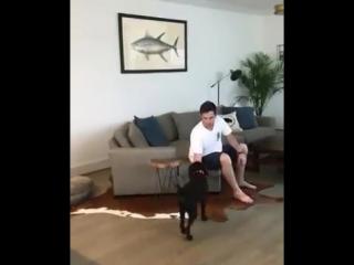 Идеальный пёс для жизни)